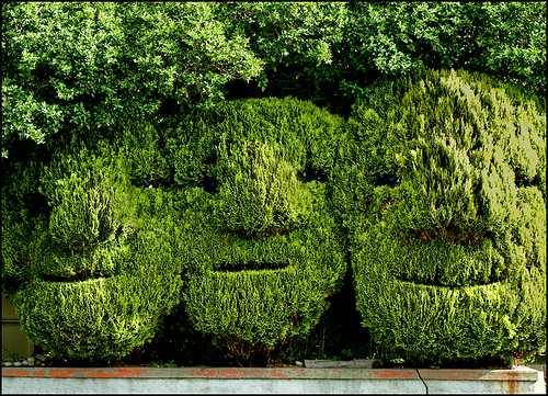How To Trim And Prune Shrubs