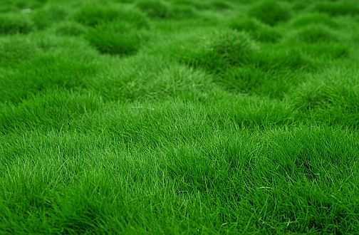 Identifying Lawn Problems And Rectifying Them
